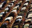 Waarom in het Arabisch bidden?